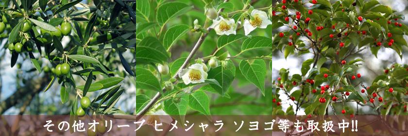 関東 ヤシの木